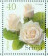 SRB 2007-187 DEFINITIVE ROSE, SERBIA, 1 X 1v, MNH - Rosen