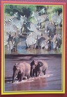 AFRICAN WILDLIFE - ZEBRA AND ELEPHANT - KENYA Nv - Zebre