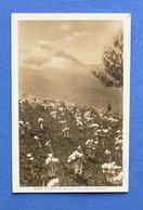 Cartolina Sauze D'Oulx - Primavera- Anemoni - 1925 Ca. - Unclassified
