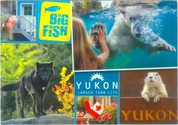 Tiere Am Yukon - Eisbär, Wolf, Murmeltier - Tierwelt & Fauna