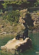 OTARIE DE CALIFORNIE - Animales
