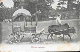 Sri Lanka (Ceylon, Ceylan) - Zebu, Attelage - Collection Des Bonbons Barnier à Rouen - Carte Non Circulée - Sri Lanka (Ceylon)