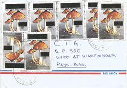 DRC Congo 2002 Tshela Code Letter D Mushroom 50FC Overprint Cover - Afgestempeld