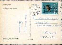 30294 Hungary,circuled Card 1971 Stamp Prehistoric Placodont Wildlife,marine Reptiles Triassic Period - Préhistoire