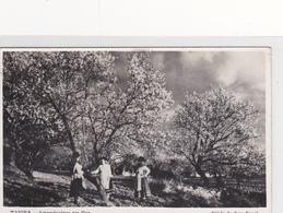 Portugal -Tavira  Amendoeiras Em Flor Circulou Para Golegã Em18-05 -1958 - Faro