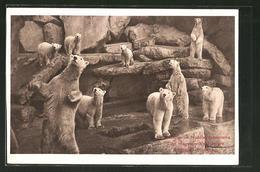 CPA Hamburg-Stellingen, Eisbären Im Nordlandpanorama Von Carl Hagenbeck's Tierpark - Ours