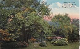 Connecticut Bridgeport Chestnut Trees At Beardsley Park Curteich - Bridgeport