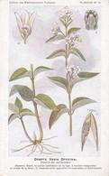DOMPTE VENIN OFFICINAL - Plantes Médicinales