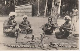Carte Photo  Charmeurs De Serpents  CEYLON - Sri Lanka (Ceylon)