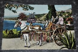 1441-  Carro Siciliano - Palermo