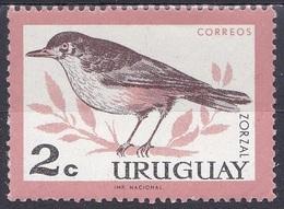 Uruguay 1963 Tiere Fauna Animals Vögel Birds Oiseaux Pajaro Uccelli Drossel, Mi. 955 ** - Uruguay