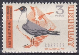 Uruguay 1969 Tiere Fauna Animals Vögel Birds Oiseaux Pajaro Uccelli Möwen Seagull, Mi. 1156 ** - Uruguay