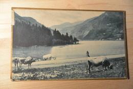 Pascolo In Riva Al Lago 1916 - Pasture By The Lake   -1825- - Cows