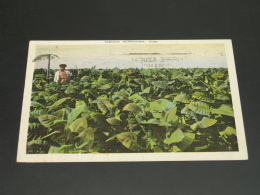 Cuba 1945 Tobacco Plantation Picture Postcard To France Faults *8836 - Cuba