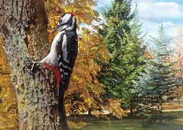 2018-023 Russia Russland Russie Rusia Postcard Card Woodpecker BIRDS - Vögel