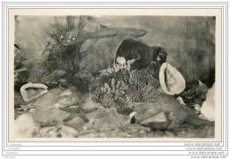 75 - PARIS - Exposition Coloniale 1931 - Pavillon De La Hollande - Merveilles De La Mer Des Indes - Aquarium - Mostre