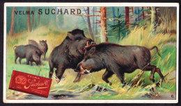 CHROMO Chocolat SUCHARD  Sanglier  Porc Sauvage     Wild Boar  Serie 233 - Suchard