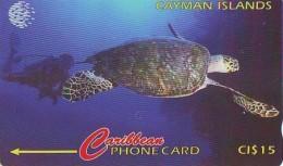 Télécarte * CAYMAN ISLANDS * TURTLE *  (2271)  PHONECARD  * TORTUE *  TELEFONKARTE * SCHILDKRÖTE - Turtles