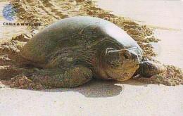 Télécarte * ASCENSION ISLAND * TURTLE *  (2272)  PHONECARD  * TORTUE *  TELEFONKARTE * SCHILDKRÖTE - Turtles