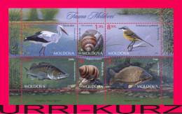 MOLDOVA 2014 Nature Fauna Fish Zander Carp Birds White Stork,Western Yellow Wagtail Snails S-sheet Mi Bl.67(883-888) MNH - Postzegels