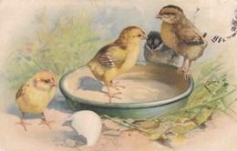 Joyeuses Pâques, Happy Easter, Kuikens, Chicks, Poussins (pk42962) - Pâques