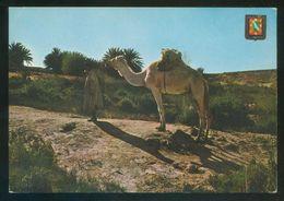 Sahara. *Aaiun. Meseled. Camino Del Oasis* Ed. Fisa Nº 10. Nueva. - Western Sahara