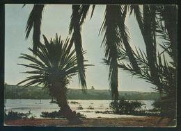 Sahara. *El Aaiun. Contra Luz Sobre El Río* Ed. Ph. Martin Nº 30061. Nueva. - Western Sahara