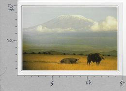 CARTOLINA NV DE AGOSTINI - KENYA - L'Amboseli E Il Kilimangiaro - Vedute Dal Mondo - 10 X 15 - Kenia