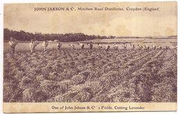 John Jakson & C , Mitcham Road Distilleries, Croydon - Inghilterra