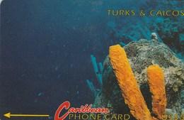 Turks And Caicos - Orange Tube Sponge (Without Logo) - 1CTCB - Turks And Caicos Islands