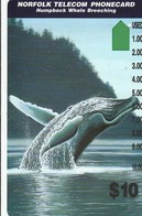 Norfolk Island - Humpback Whale - Norfolk Island
