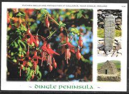 Ireland, Co. Kerry, Dingle Peninsula, Fuchsia Bells, Unused - Kerry