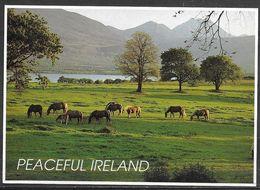 Peaceful Ireland, Horses In Pasture, Unused - Ireland