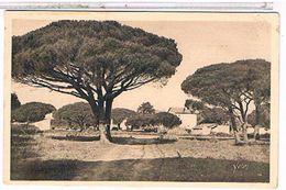 83  SAINT  TROPEZ    PINS  MARITIMES       1U74 - Saint-Tropez