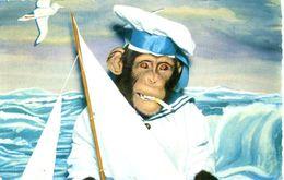 ANTHROPOMORPHIC MONKEY - AS A SAILOR - Monkeys
