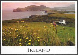 Ireland, Wild Flowers, Sea Coast, Unused - Ireland