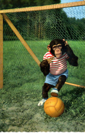ANTHROPOMORPHIC MONKEY - AS A GOALKEEPER - Monkeys