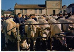 71 ST CHRISTOPHE EN BRIONNAIS La Celebre Foire Aux Bestiaux, Vaches - France