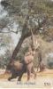 ZIMBABWE - Jolly Elephant, Chip GEM3.1, Exp.date 12/00, Used - Zimbabwe