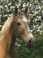 Horse, Pferd, Konie, Cheval, Animals - Pferde