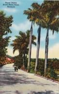 Bermuda South Shore Road Royal Palms - Bermuda