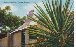 Bermuda Century Plant And Cottage - Bermuda