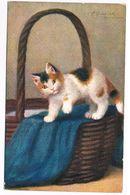 CAT-61   SPERLICH : Kitten On A Basket - Gatti