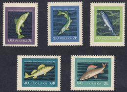 POLONIA - POLSKA - 1958 - Serie Completa Nuova MNH: Yvert 928/932; 5 Valori. - 1944-.... Republik