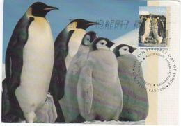 Australian Antarctic Territory 2017 Postally Used Maximum Card,Wildlife,Emperor Penguin - Maximum Cards