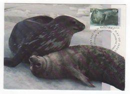 Australian Antarctic Territory 2017 Postally Used Maximum Card,Wildlife,Weddel Seal - Maximum Cards