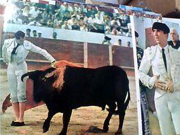 SPAGNA  ESPANA CORRIDA -LUIS-MIGUEL DOMINGUIN. Remate De Muleta TORO TORERO N1975 GN21423 - Corrida