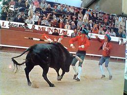 PORTUGAL - Tourada, Corrida, Bullfight, Course De Taureaux N1980 GN21424 - Corrida