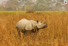 T87-010  ] Rhinoceros  WWF W. W. F. Endangered Species , China Pre-stamped Card,postal Stationery - Other