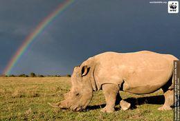 T87-012  ] Rhinoceros  WWF W. W. F. Endangered Species , China Pre-stamped Card,postal Stationery - Other